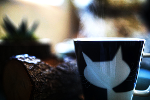 Coffee and Cat Free Stock Photo